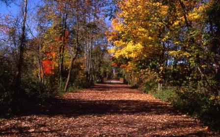 Image of Trail in Autumn